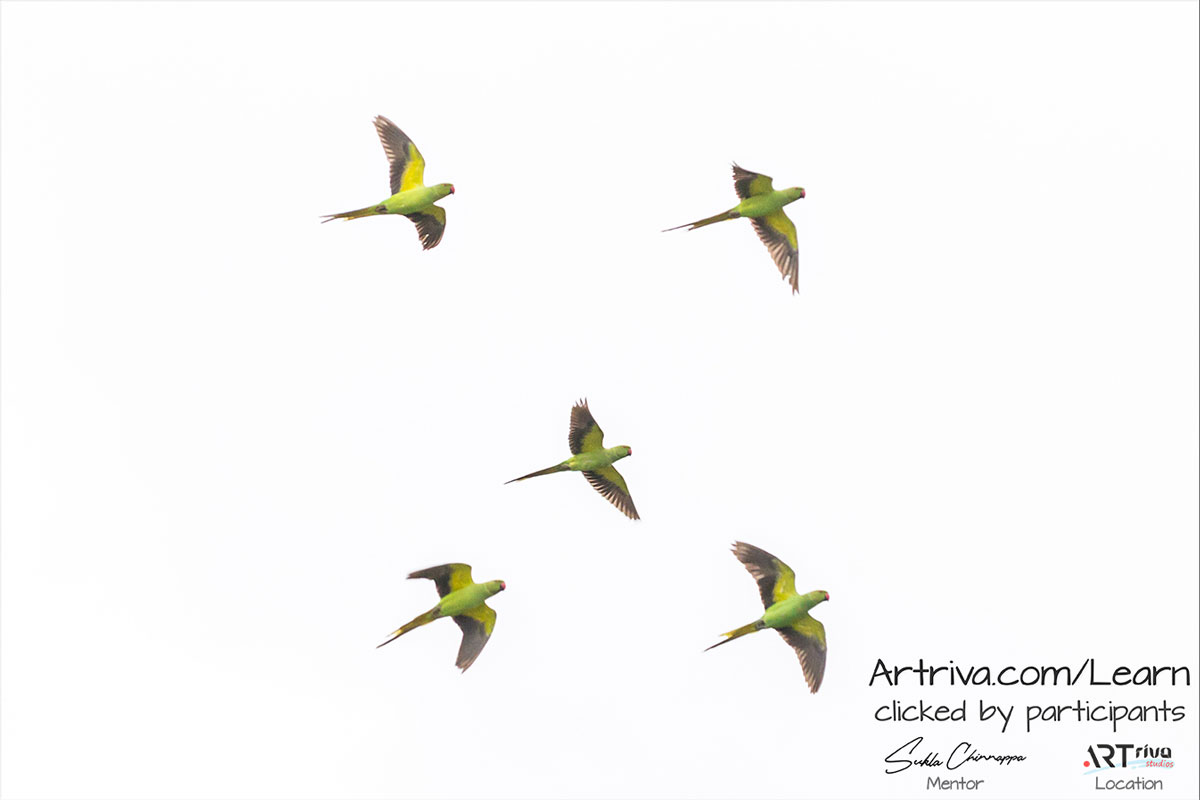 parrots_flying.jpg