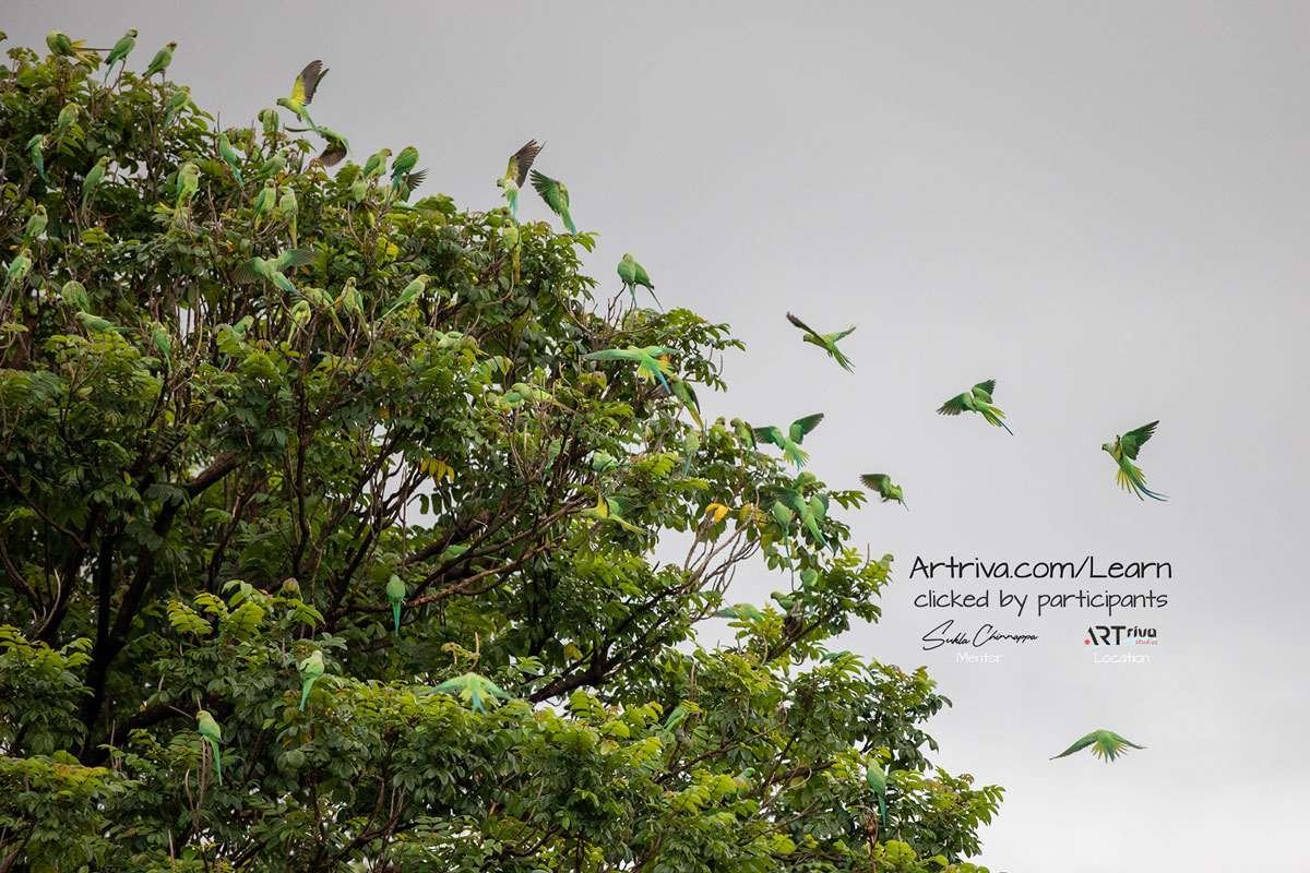 parrots_flying_and_sitting_on_tree.jpg